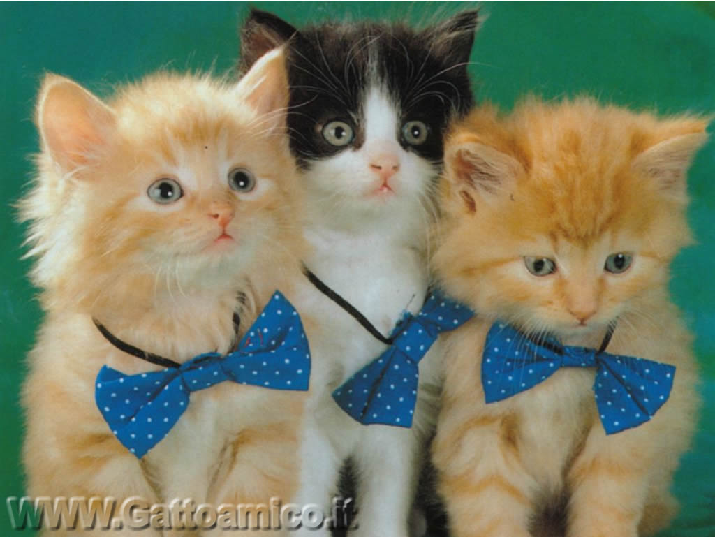 Sfondi gatti 16 for Sfondi desktop gatti